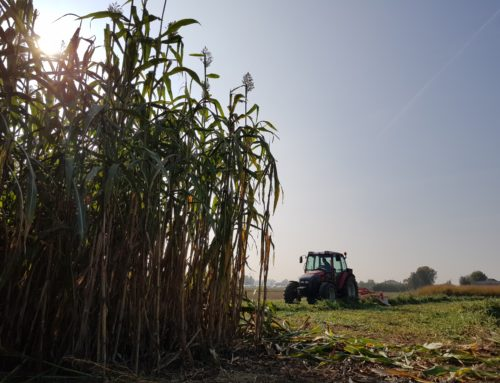 Developing Sustainable Value Chains for Advanced Biofuels