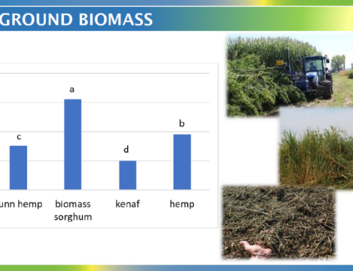 Growing lignocellulosic crops in rotation with food crops
