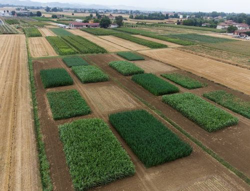 Growing annual lignocellulosic crops in rotation with cereals – field updates from the experimental trials of BECOOL