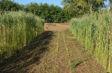 BECOOL: Preliminary Results about Double Cropping System from Spain