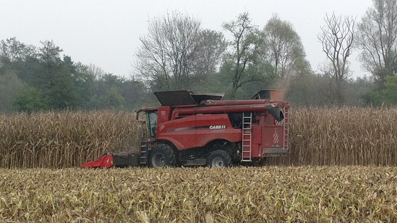 Recovering Maize Cob: Converting Untapped Biomass Resource into Valuable Feedstock